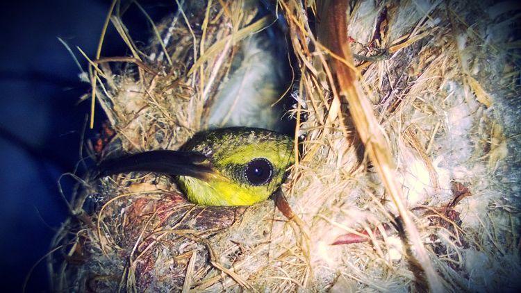 mind-bomb-008-olive-backed-sunbird.jpg