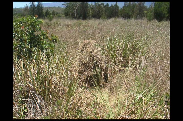 Soldier Camouflage Grass /Photo Credit: The Brigade