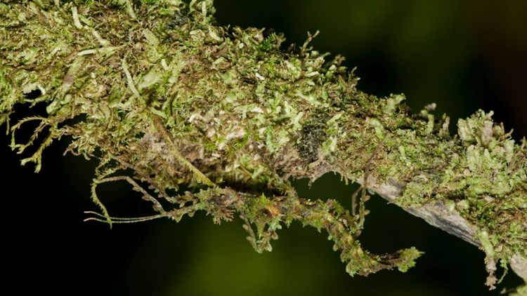 insect-camouflage.jpg