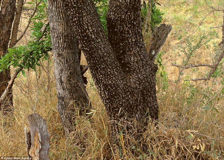 Leopard Camouflage