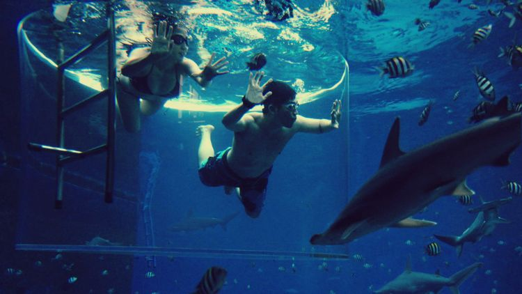 win-a-chance-to-swim-with-sharks-at-marine-life-park.jpg