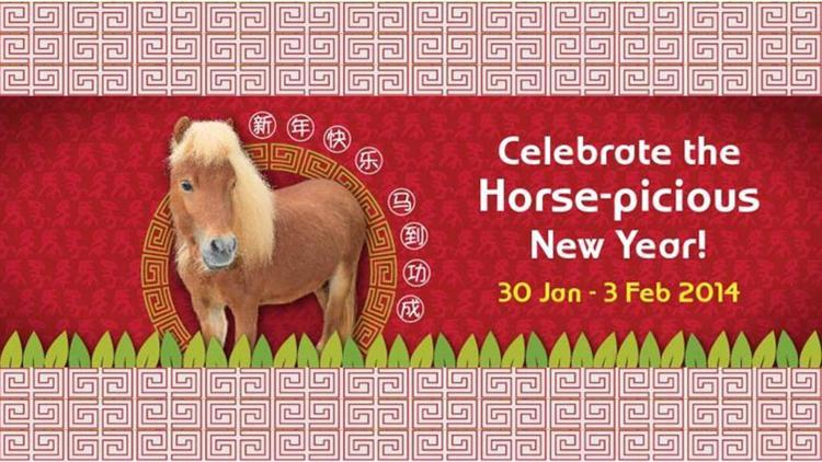 singapore-zoo-horse-picious.jpg