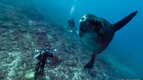 Mola Mola / Photo Credit: Google