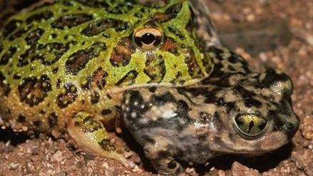 Photo Credit: John Cancalosi, naturepl.com
