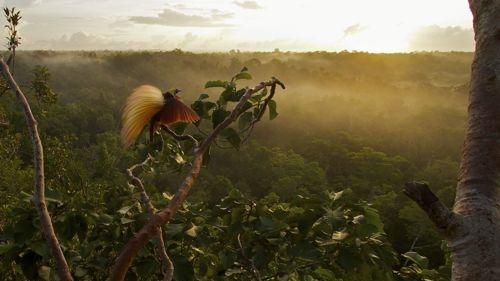Photo Credit: BBC Earth