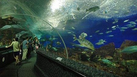 Sentosa_Island_Underwater_World_Glass_Tunnel_bykibitan.jpg
