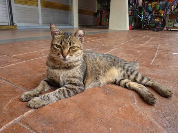 straycats_singapore.jpg