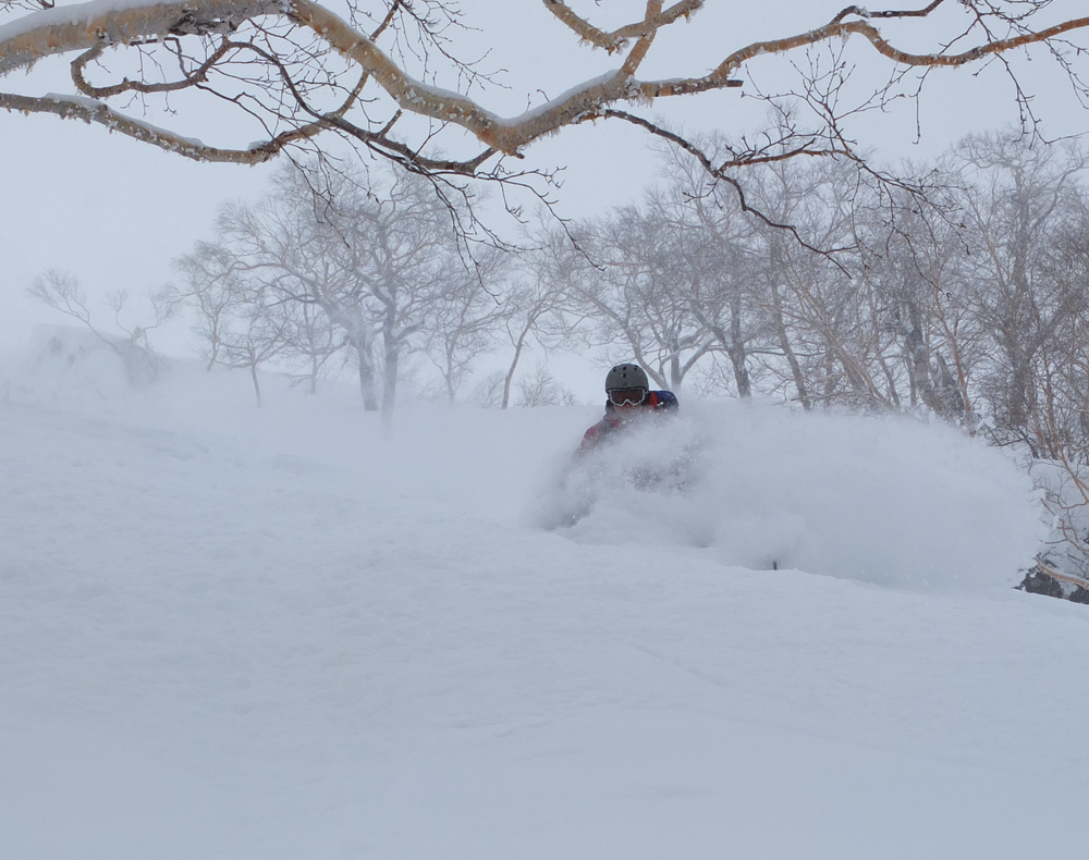 Trees and pow. What Rusutsu does best. © The Powder Project Pty Ltd