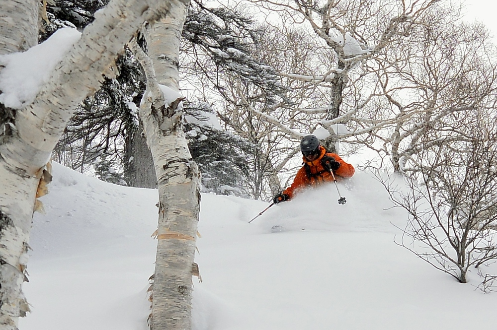 Trees. Pow. Good times. © The Powder Project Pty Ltd