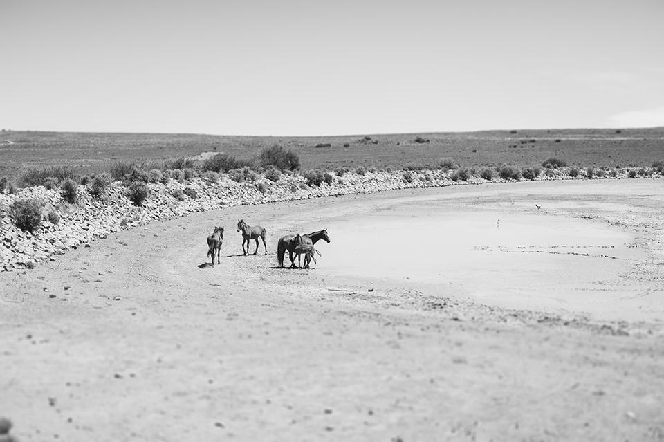 RyanParker_FineArtPhotographer_Travel_Karoo_Bloemhof_DSC_9364.jpg
