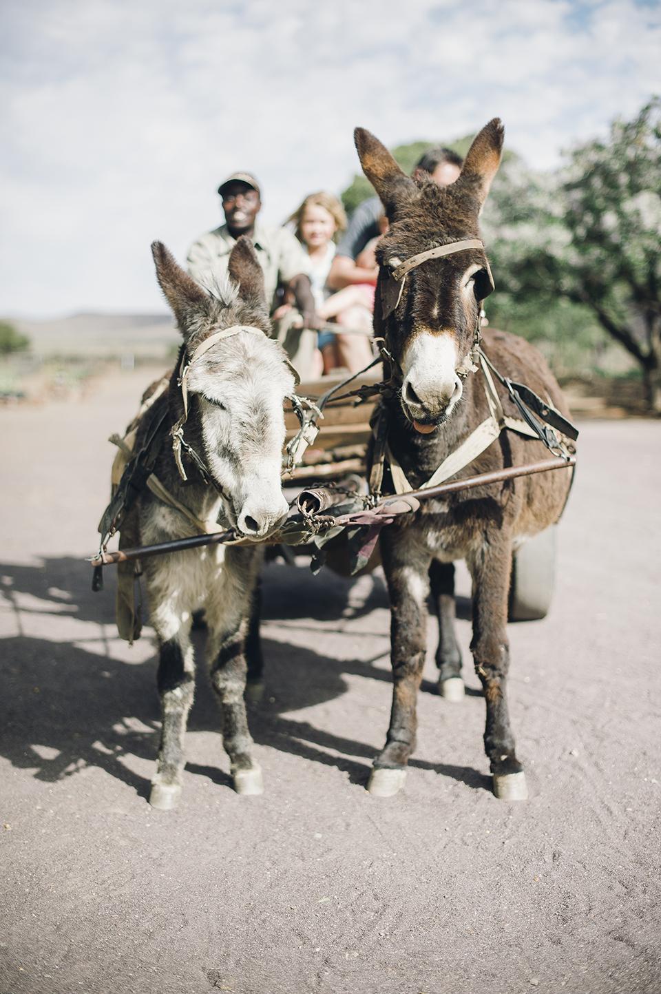RyanParker_FineArtPhotographer_Travel_Karoo_Bloemhof_DSC_9158.jpg