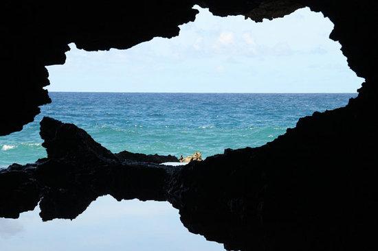 animal-flower-cave.jpg