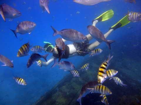 snorkeling-in-barbados.jpg