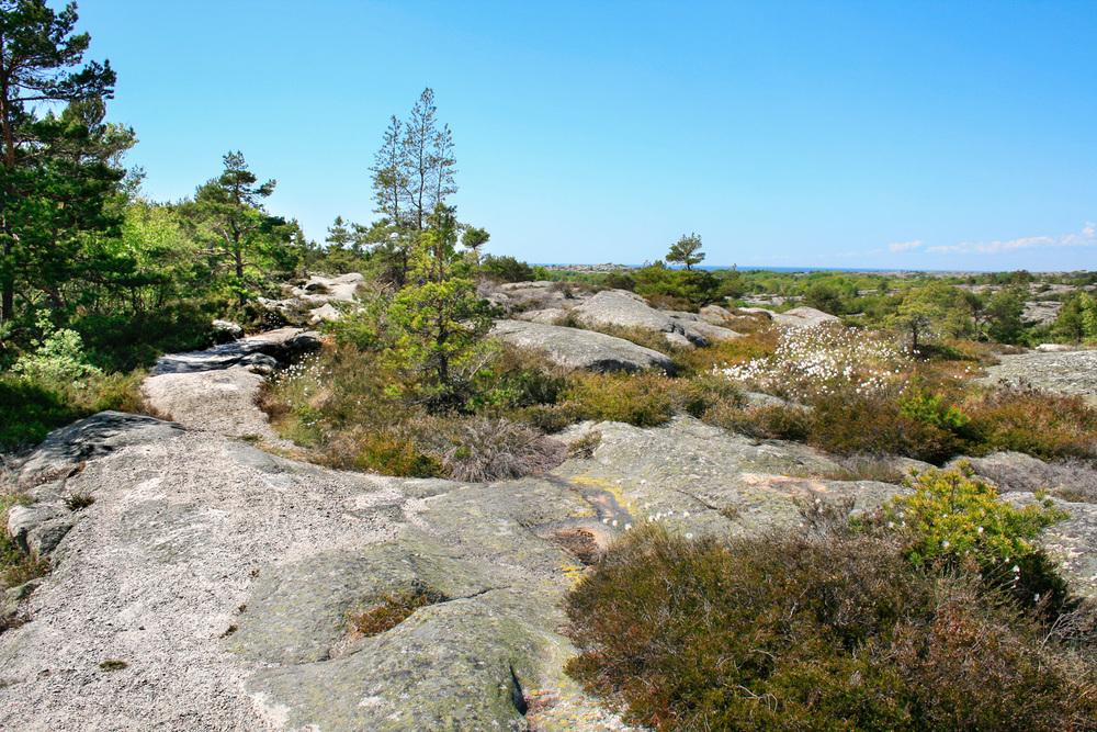 TYPISK NATUR PÅ SPJÆRØY