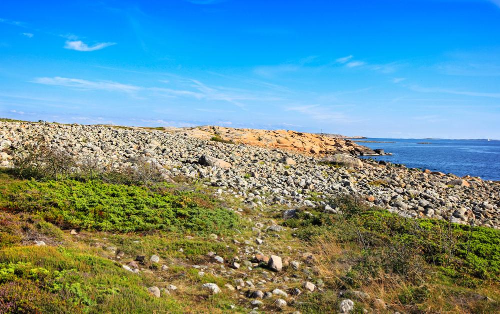 Spennende natur. På kyststistrekningen mellom Brattestø og Vikerhavn skifter plutselig naturen karakter flere ganger. Fra svabergområder til store rullesteinstrender, fra knusktørr kystlynghei til fuktige strandengområder hvor kyrene trives så godt.