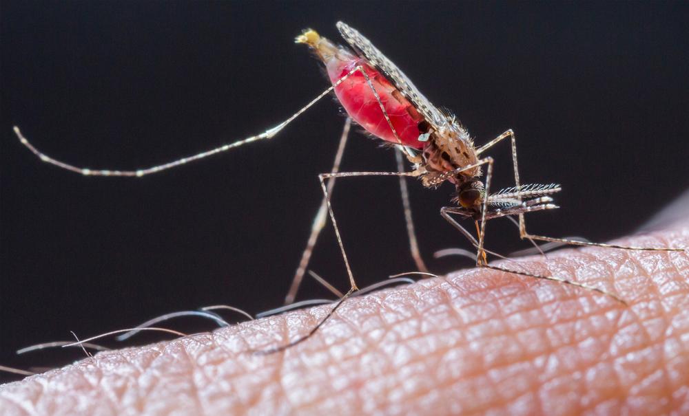 Du kan trygt bevege deg inn i Arekilen naturreservat uten å være redd for at du skal bil smittet av malaria, men myggen slipper du ikke unna i et fuktig sump- og våtmarksområde.