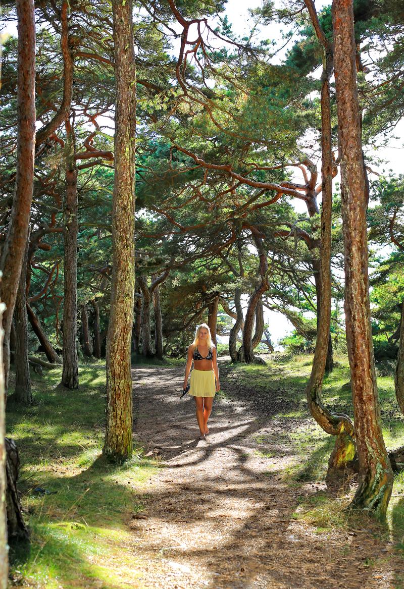 Hvilken herlig tur til badestranden. På vei til Storesand må du igjennom en eventyrlig skog, Hvaler Prestegårdskog Naturreservat. Her er det forvridde grener, varmende sol som flakker mellom sandfurustammene, og ikke minst: havet hører du hele veien til stranden.