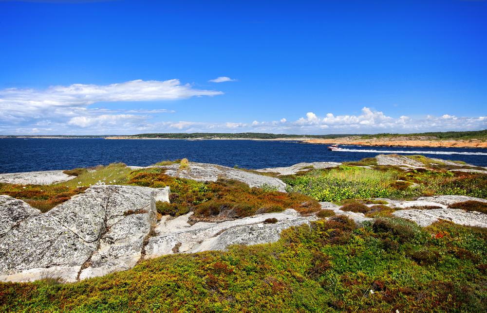 Lauer - et naturlig paradis med verdifull skjærgårdsnatur. Til tross for øyas karrige landskap, så vokser blant annet lyng, duskmyrull, strandkål, strandnellik, dverggylden og gul hornvalmue her.