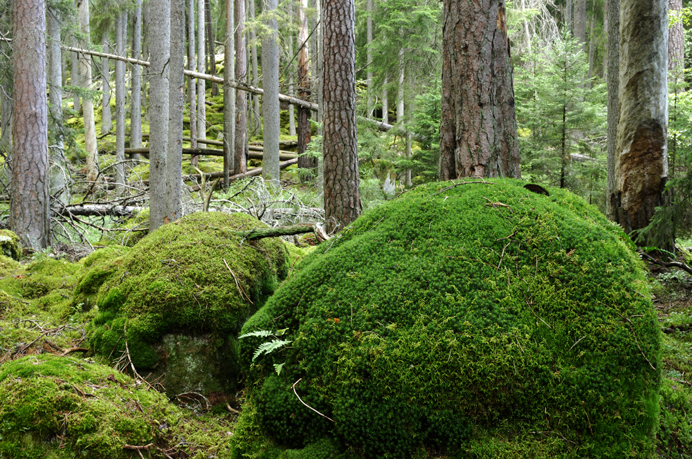 skog-myk.jpg