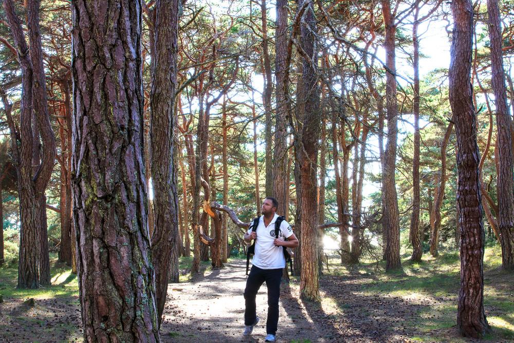 Prestegårdskogen naturreservat på Kirkøy