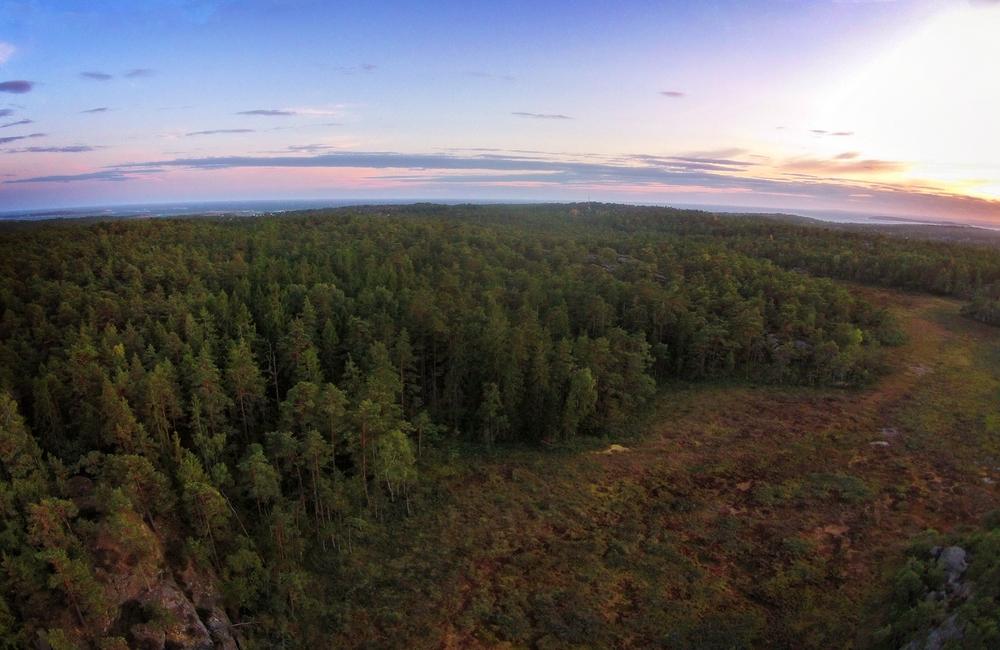 Ilemyr naturreservat - Et fantastisk myr- og sumpområde. Hadde det ikke vært for at man her på bildet så ytre Oslofjord i bakgrunn, så vil vi tro at man umulig kunne gjettet at dette landskapet er på Hvaler.