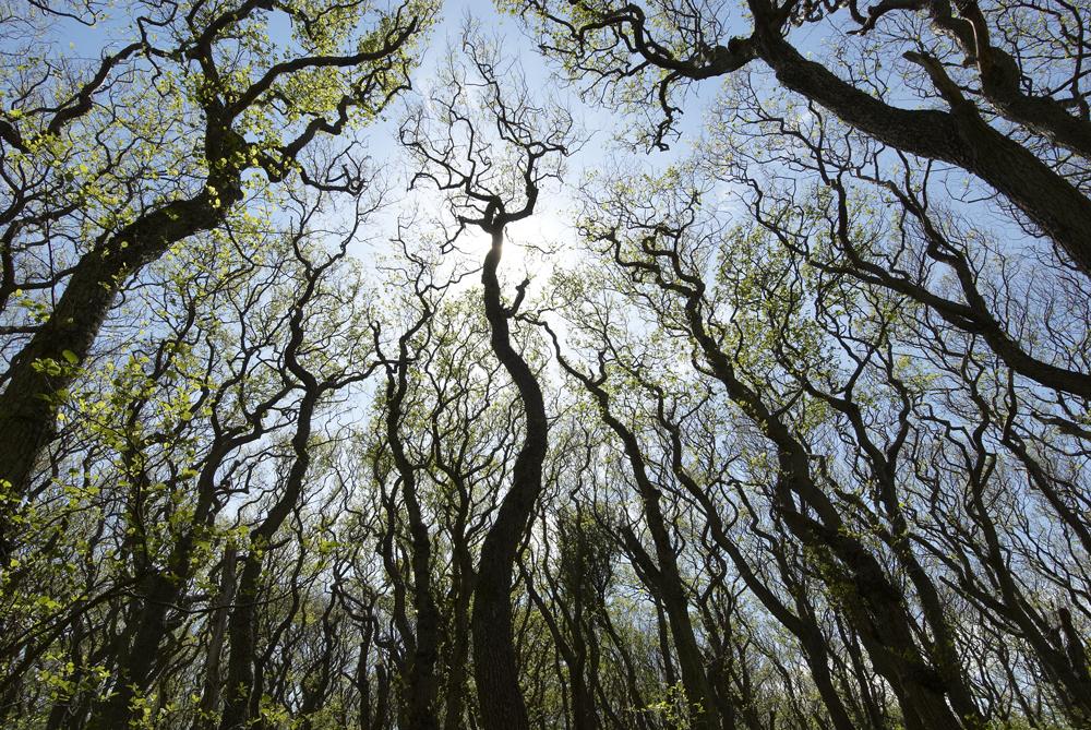 Landets største svartorsumpskog