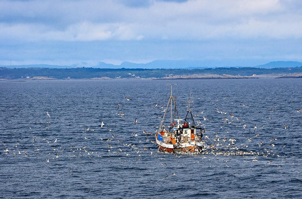 Fjordfisk