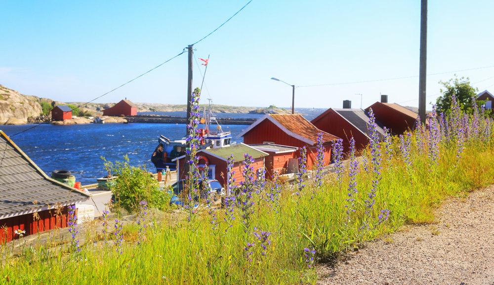 Utgårdskilen-and-Fjordfisk-and-some-flowers.jpg