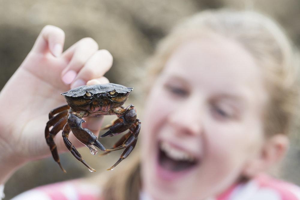 Barn-krabbejakt-fiske-krabber-70405.jpg