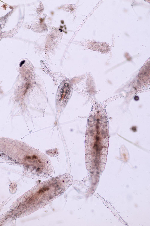 Plankton-435.jpg