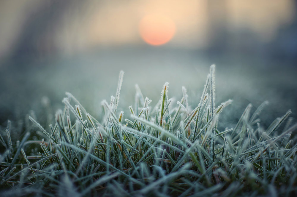 rimfrost-843502.jpg