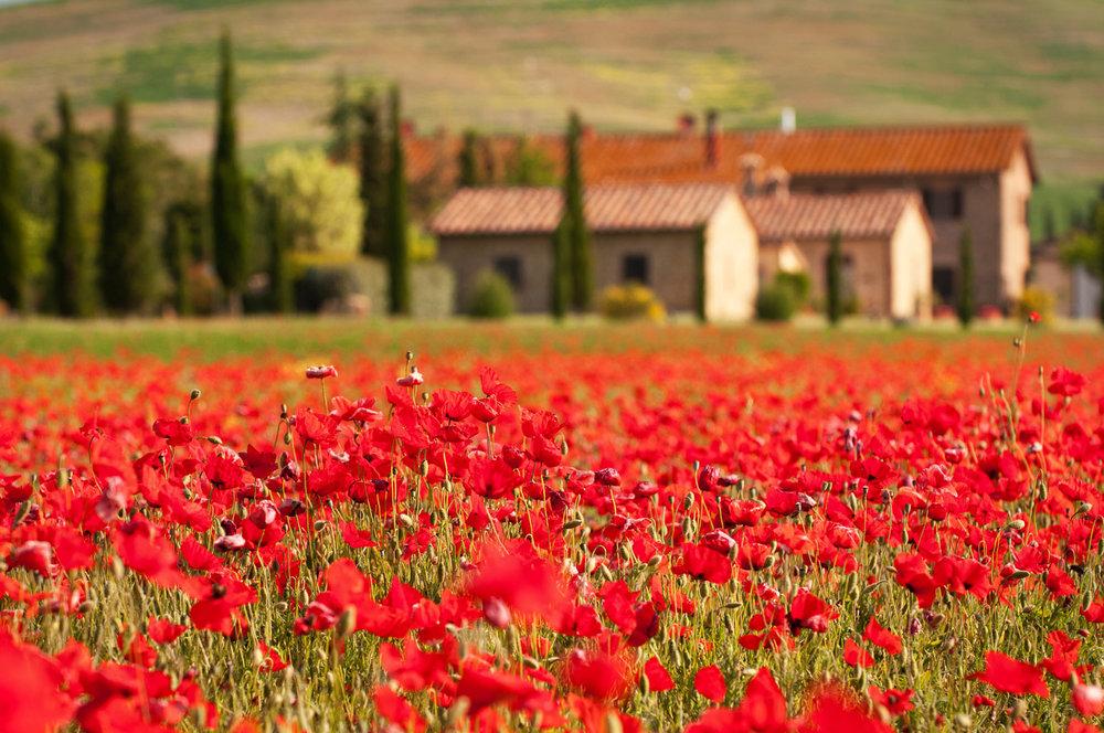 Toscana-5279.jpg