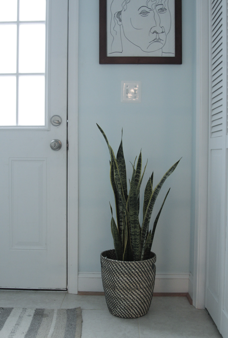 Snake plant laying low in the laundry room