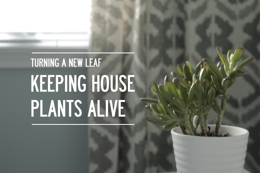 Turning a new leaf: How I'm keeping my house plants alive