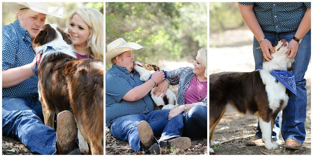 aussie australian shephard family photos.jpg
