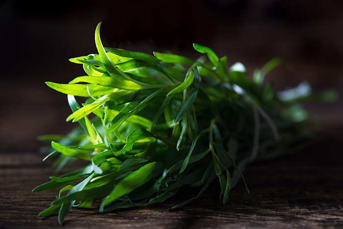 Fresh Tarragon Stock Food Photo