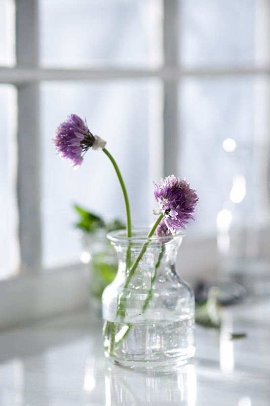 Blooming Chives on a Window Sill Stock Photo