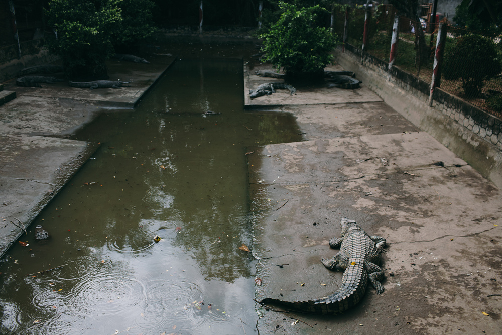 Tourists litter this crocodile cage with trash and fling pieces of meat at these crocks attached to a rope so when the reptiles move for it, the food is yanked away. Mekong Delta, Vietnam