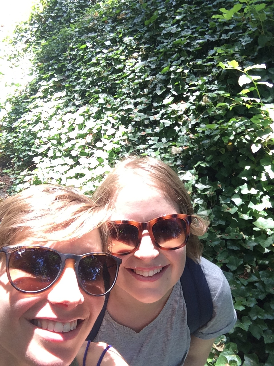 Our first day we walked through Portland's International Test Rose Garden