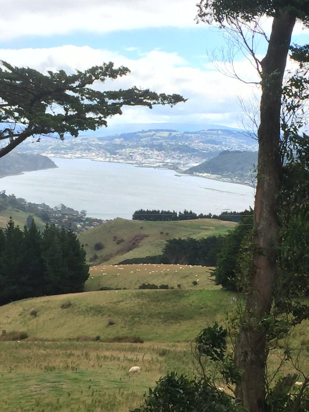 A view of Dunedin