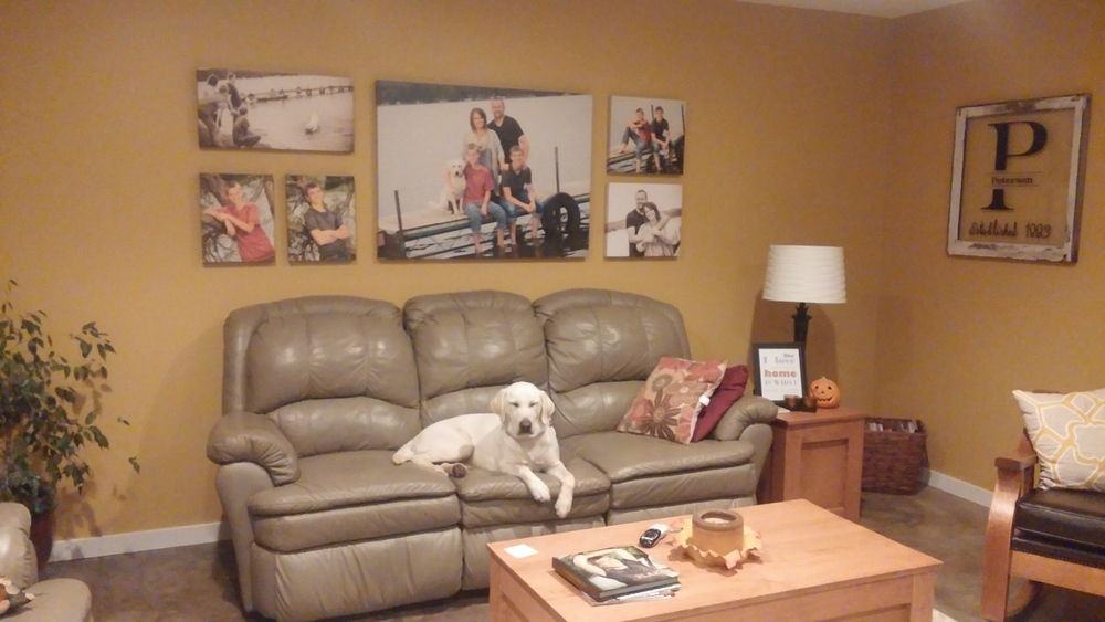 Peterson family pooch admiring their incredible, custom wall art cluster. Love it!