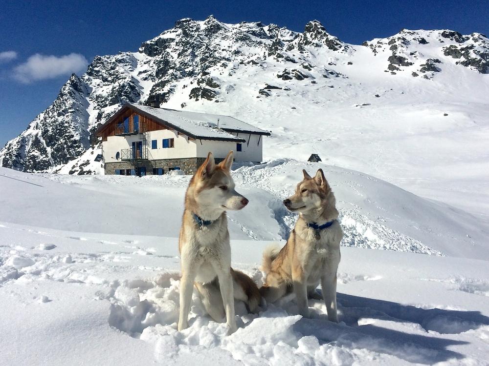 Lupa and Balto at Rifugio Bignami.