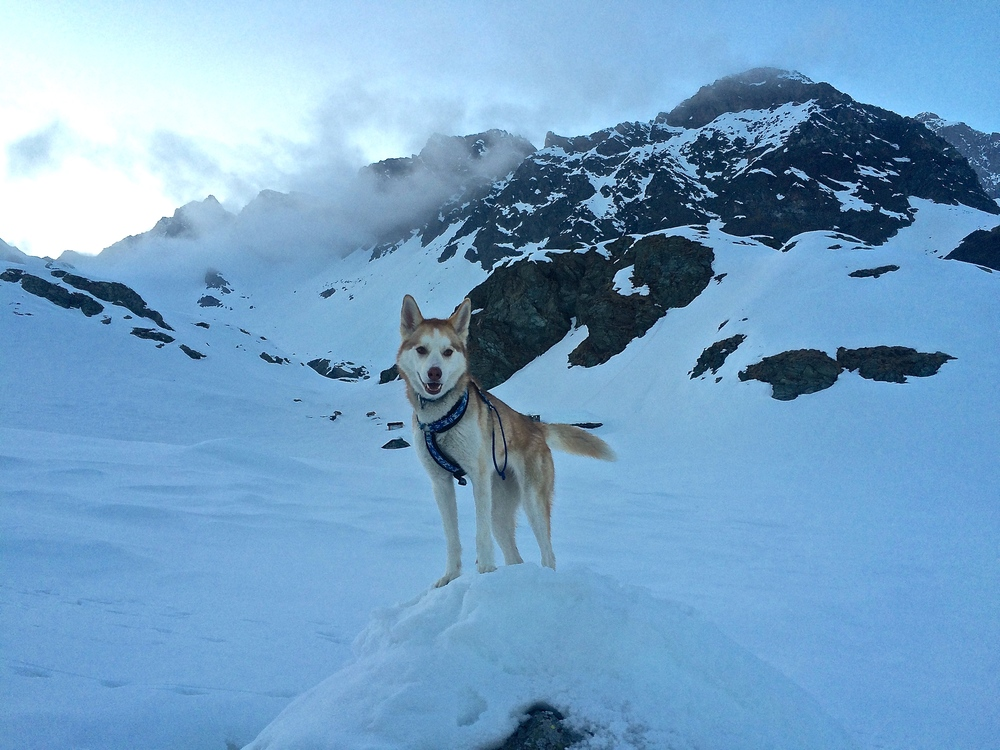 Lupa, queen of the mountain.