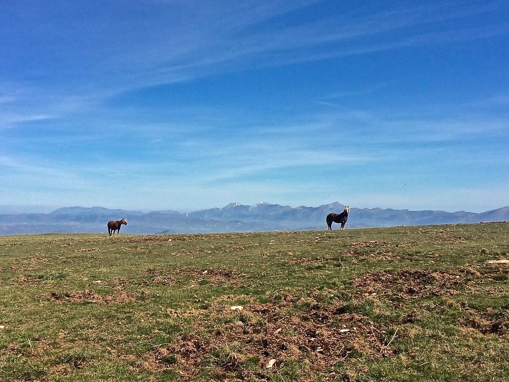 Horses grazing on the ridge.