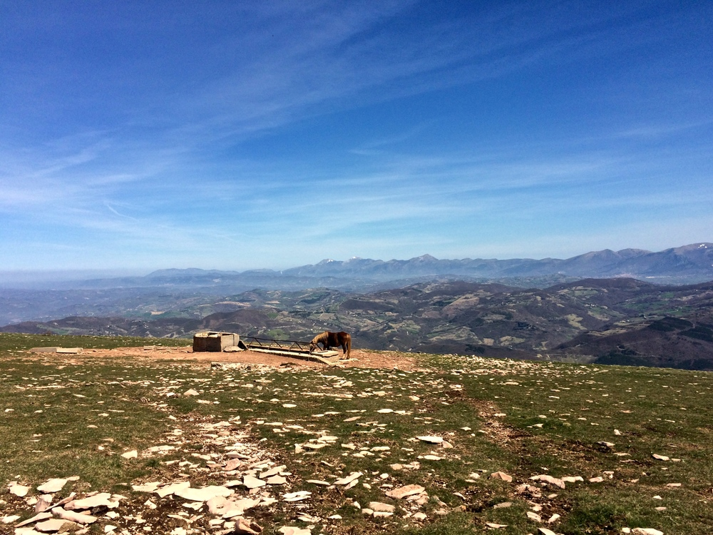 Bella vista from the ridge.