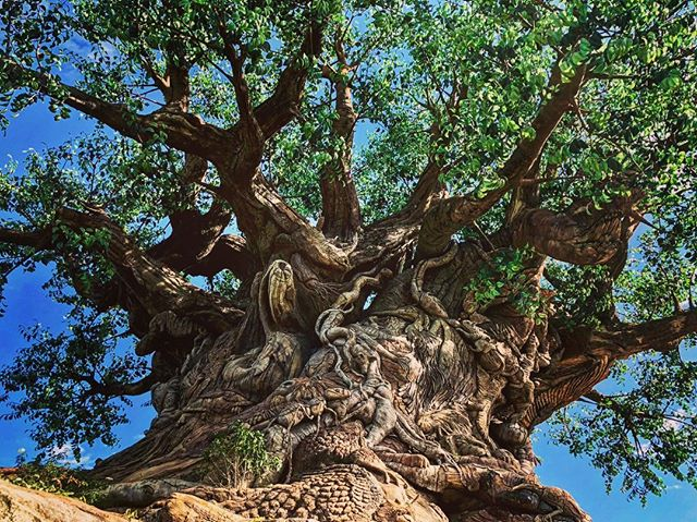 Happy Earth Day and happy birthday Animal Kingdom!