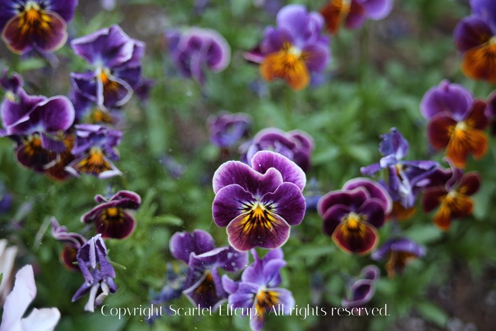 SE Spring-10.jpg