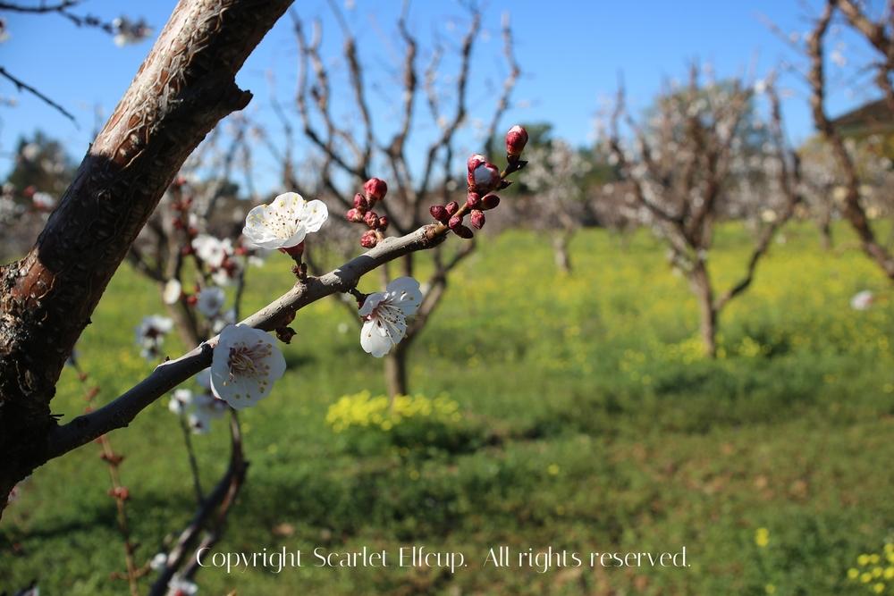 SE Spring-5.jpg