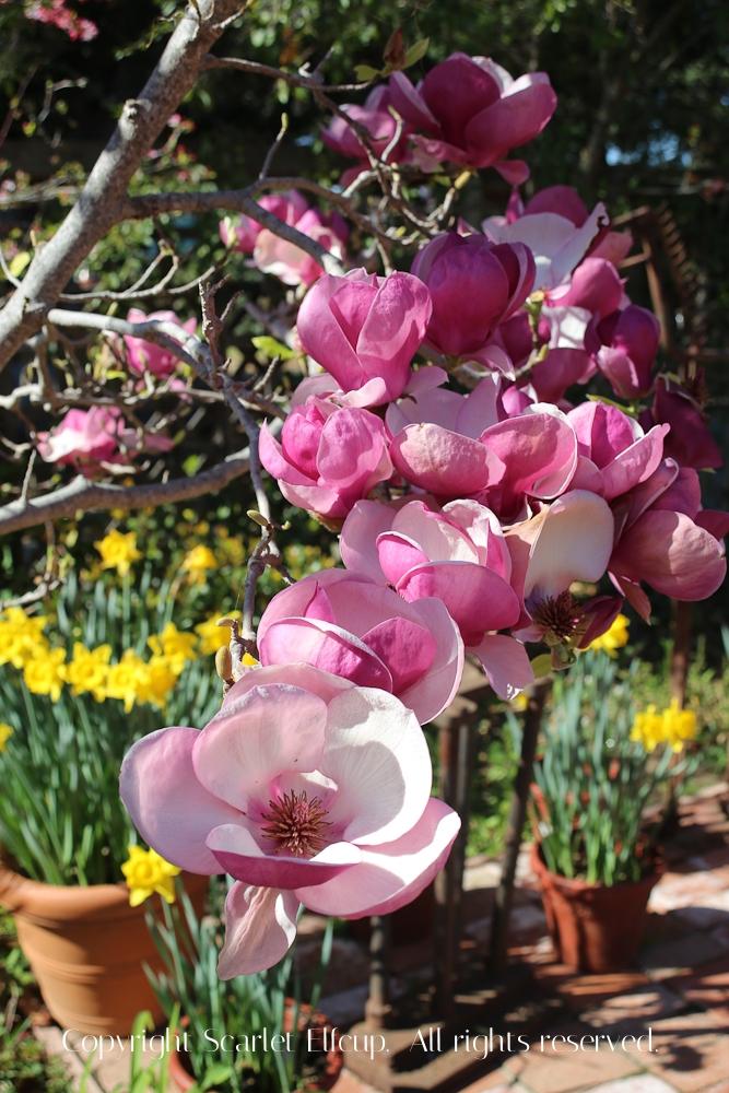 SE Spring-3.jpg