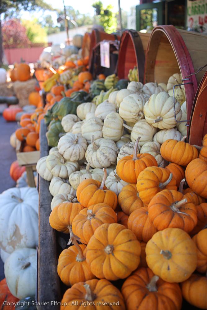 pumpkins appear